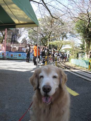 散歩6.jpg