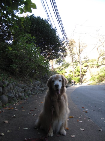 散歩5.jpg